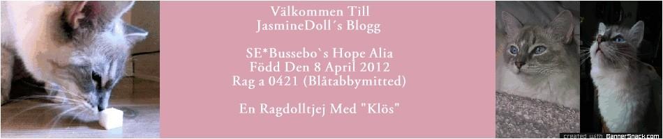 Välkommen Till Jasmine Doll´s Blogg - En Ragdoll Med 'Klös'!!! I Min Stamtavla Står Mitt Vackra Namn SE* Bussebo´s Hope Alia Född 8 April 2012